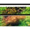 World first MIRROR UNIT for Planted Aquarium